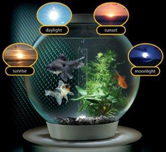 شبیه ساز نور طبیعی در آکواریوم محیط زیست آبزیان